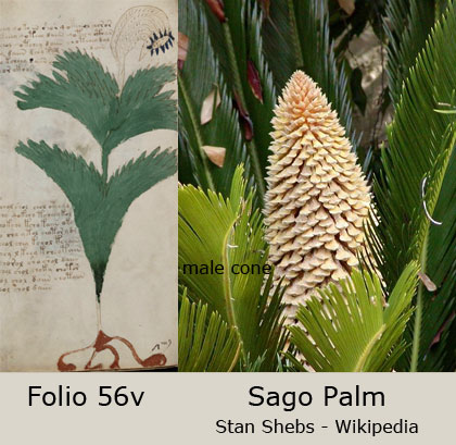 [Image: plant56v.jpg]