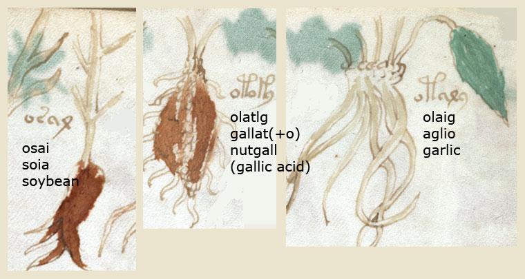 Le manuscrit de Voynich Folio_88r_1