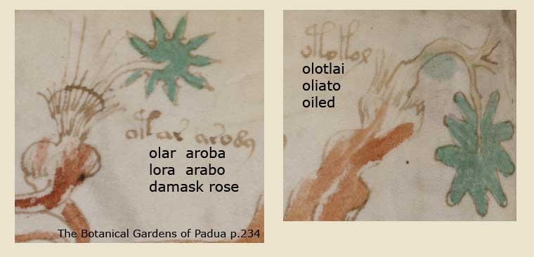 Folio 7