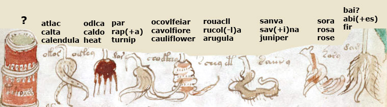 Manuscrito Voynich decodificado